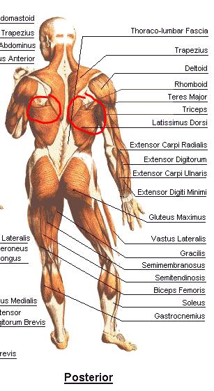 ont på vänster sida av ryggen